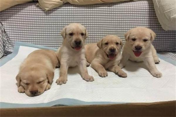 史上最恶毒的运毒,这些小狗已经被贩毒者害死了