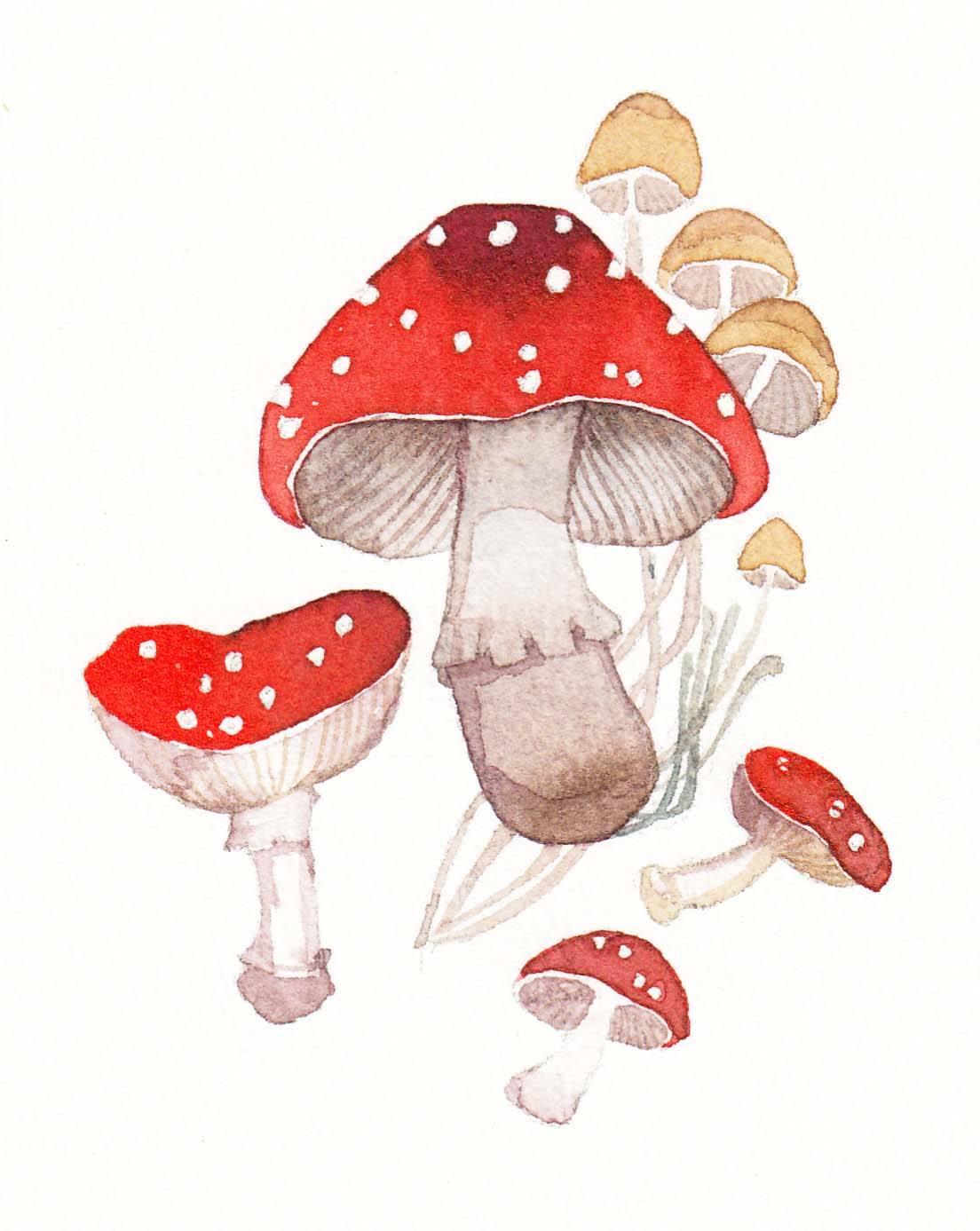 病从口入,蘑菇不能乱吃!