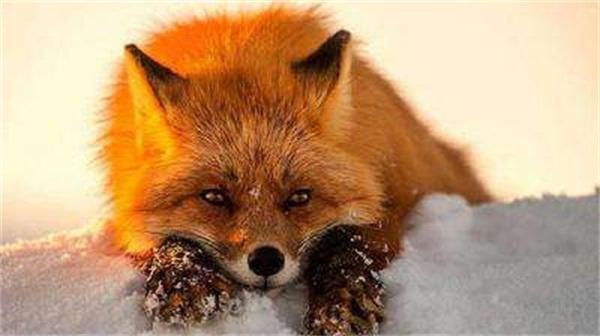 """什么是新型毒品""""火狐狸""""?"""