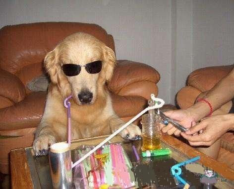 吸毒者收养的狗,也能染上毒瘾?