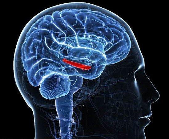 溜麻古会对大脑造成哪些危害?