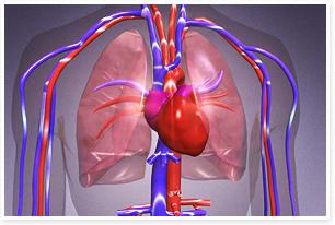 不同毒品对血管与心脏损害